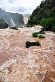 Cachoeiras de Iguazu em Brasil imagem de stock