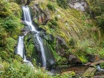 Cachoeiras e floresta de Triberg ao redor Foto de Stock Royalty Free