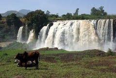 Cachoeiras em Etiópia Fotos de Stock Royalty Free