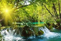 Cachoeiras na floresta Imagens de Stock