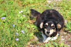 Cachorrinho Imagem de Stock