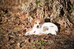 Cachorrinho Fotos de Stock Royalty Free