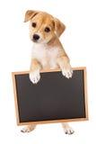 Cachorrinho amarelo que leva o sinal vazio imagem de stock royalty free