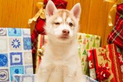 Cachorrinho atual Imagens de Stock
