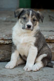 Cachorrinho bonito Fotografia de Stock Royalty Free