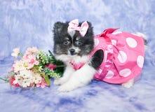 Cachorrinho bonito imagens de stock royalty free
