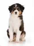 Cachorrinho bonito Fotos de Stock Royalty Free