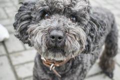 Cachorrinho bonito como um modelo imagem de stock royalty free