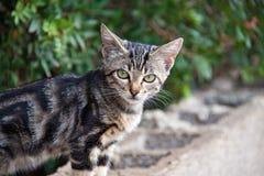 Cachorrinho bonito do gato que olha fixamente em mim foto de stock royalty free