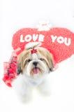 Cachorrinho bonito do tzu do shih no vestido vermelho Fotografia de Stock Royalty Free