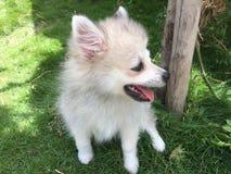 Cachorrinho bonito no gramado imagens de stock royalty free