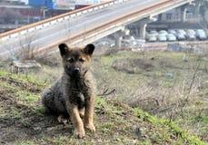 Cachorrinho bonito perdido na cidade O cão sobre foto de stock royalty free