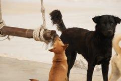 Cachorrinho bonito que mastiga o balanço de madeira na praia foto de stock