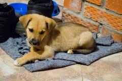 Cachorrinho bonito que olha a câmera, close up, foco seletivo Cachorrinho - retrato do cachorrinho bonito imagem de stock royalty free