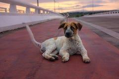 cachorrinho bonito Tailândia foto de stock royalty free