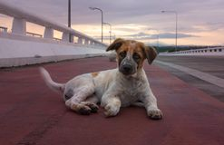 cachorrinho bonito Tailândia imagens de stock royalty free