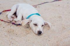 Cachorrinho branco bonito na praia Fotografia de Stock