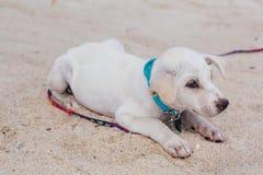 Cachorrinho branco bonito na praia Fotos de Stock