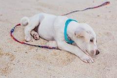 Cachorrinho branco bonito na praia Imagens de Stock Royalty Free