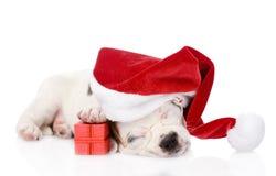 Cachorrinho com caixa de presente e o chapéu vermelhos de Santa do vermelho Isolado no branco Imagem de Stock
