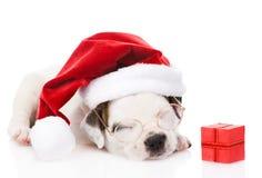 Cachorrinho com caixa de presente e o chapéu vermelhos de Santa Isolado no backgro branco Imagem de Stock