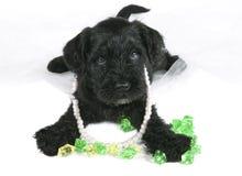 Cachorrinho com joia Foto de Stock