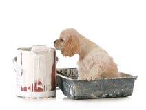 Cachorrinho com pintura fotos de stock
