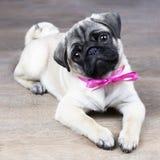 Cachorrinho com uma curva cor-de-rosa imagens de stock