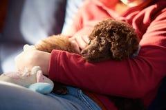 Cachorrinho da caniche diminuta Fotos de Stock Royalty Free