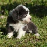 Cachorrinho da collie farpada no jardim Fotos de Stock