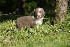Cachorrinho da collie farpada no jardim Imagem de Stock Royalty Free