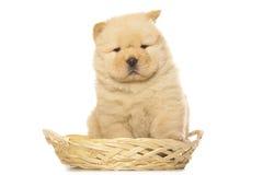 cachorrinho da Comida-comida Fotos de Stock