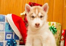 Cachorrinho da jovem corça Foto de Stock Royalty Free