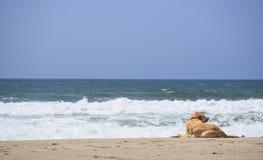 Cachorrinho da praia Foto de Stock Royalty Free