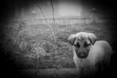 Cachorrinho da vira-lata no dia nevoento na pista de pedra névoa e cães foto de stock