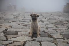Cachorrinho da vira-lata no dia nevoento na pista de pedra névoa e cães fotos de stock