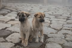 Cachorrinho da vira-lata no dia nevoento na pista de pedra névoa e cães foto de stock royalty free