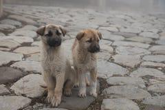 Cachorrinho da vira-lata no dia nevoento na pista de pedra névoa e cães imagens de stock royalty free