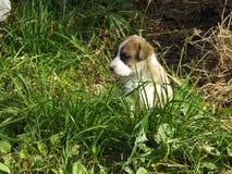 Cachorrinho de assento na grama fotos de stock