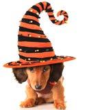 Cachorrinho de Dia das Bruxas Fotografia de Stock Royalty Free