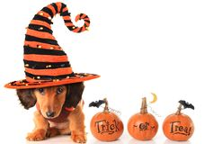 Cachorrinho de Dia das Bruxas Imagens de Stock Royalty Free