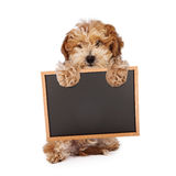 Cachorrinho de Havanese que guarda o sinal vazio da placa de giz Fotos de Stock Royalty Free