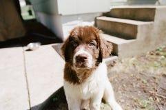 Cachorrinho de Terra Nova fotografia de stock