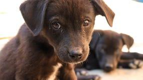 Cachorrinho disperso pequeno inocente imagens de stock royalty free