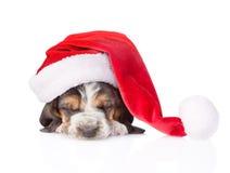 Cachorrinho do cão de basset do sono no chapéu vermelho de Santa Isolado no branco Imagens de Stock Royalty Free