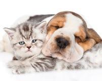 Cachorrinho do cão de Basset do sono que abraça o gatinho do gato malhado Isolado Foto de Stock Royalty Free