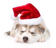 Cachorrinho do cão de puxar trenós Siberian do sono com chapéu de Santa Isolado no branco Fotografia de Stock