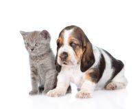 Cachorrinho do cão do gatinho e de basset que está junto Isolado no branco Fotografia de Stock Royalty Free