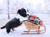 Cachorrinho do Corgi com o trenó do ano novo com os presentes no fundo do inverno imagens de stock