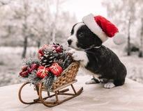 Cachorrinho do Corgi no chapéu de Santa fotografia de stock royalty free